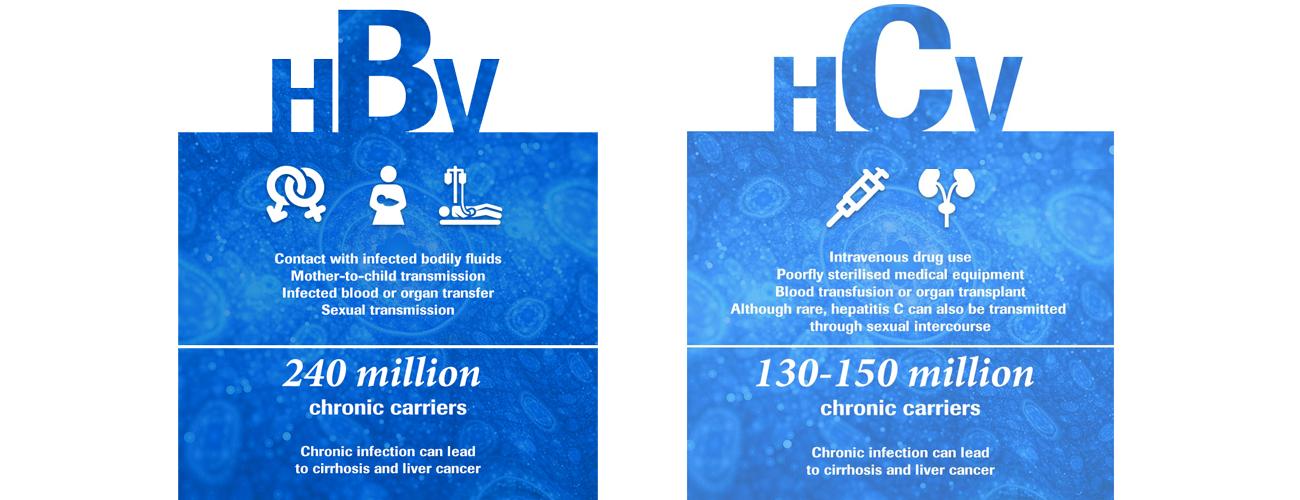 B型肝炎の事実、C型肝炎の事実