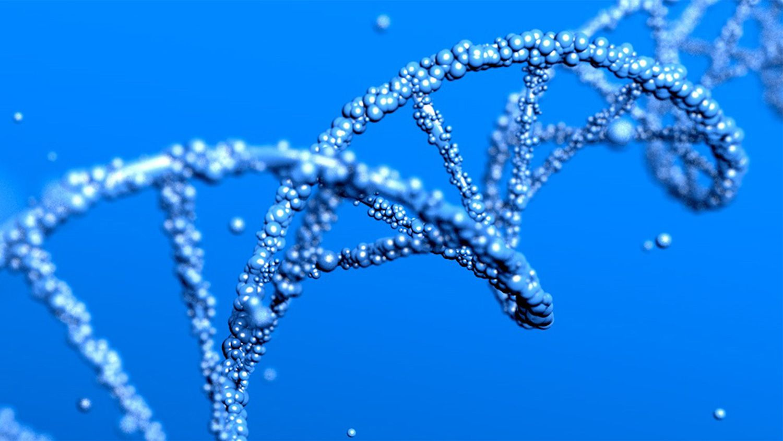 MMR DNA strand