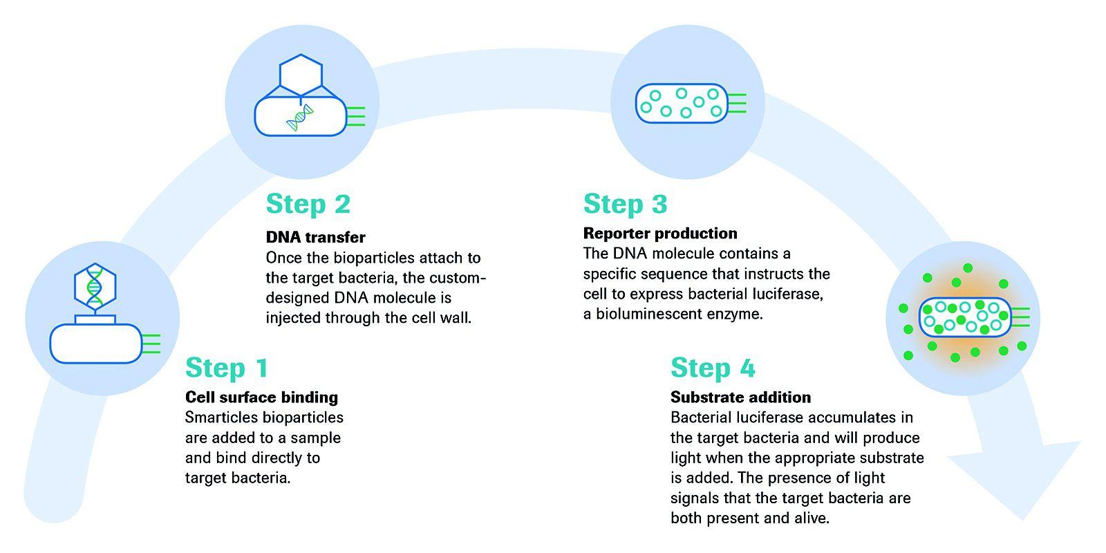 target-bacteria-four-step-process