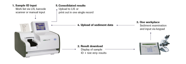 cobas u 411 urine analyzer workflow explanation