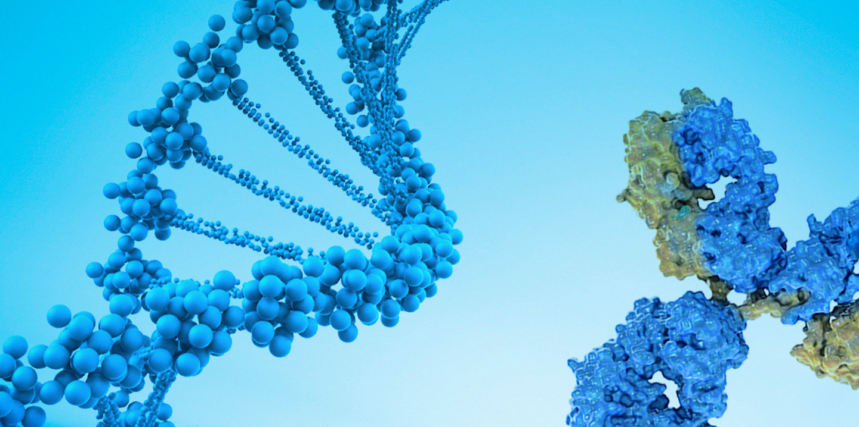 DNA and a SARS-CoV-2 antibody