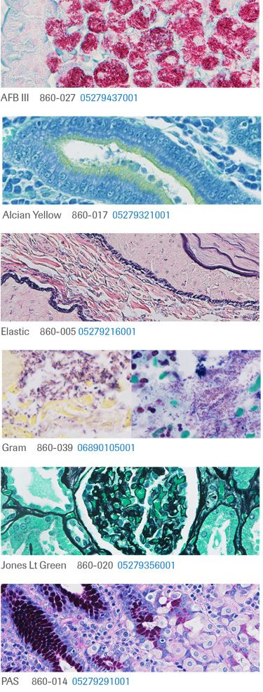 BenchMark Special Stains histology assay menu