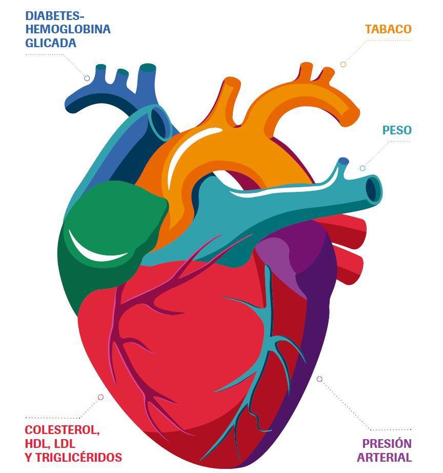 Corazón Rapid Control