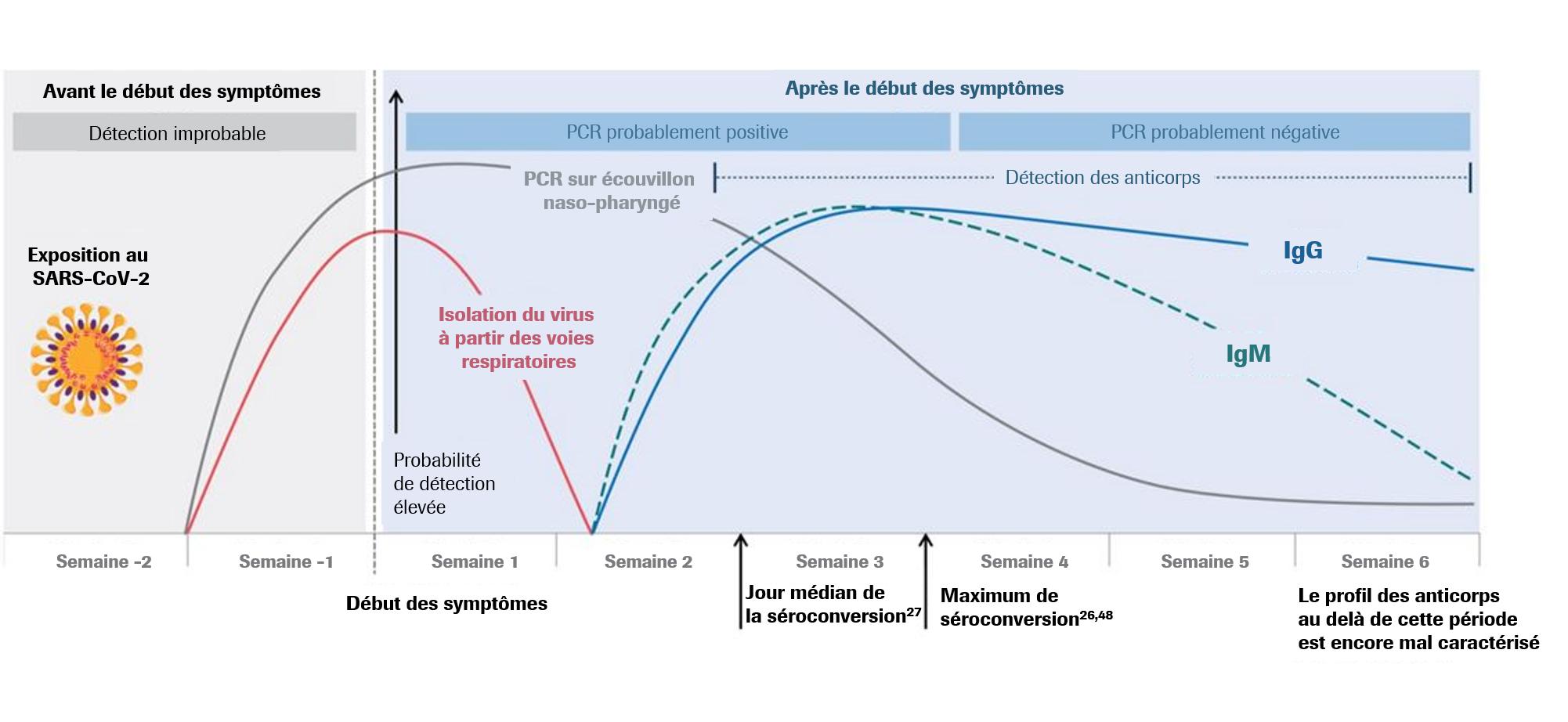 Estimation de l'évolution des marqueurs lors de l'infection par le SARS-CoV-2