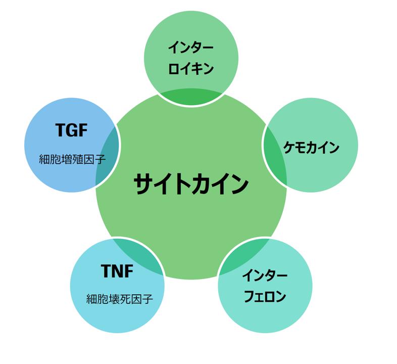 図. 主なサイトカインの種類