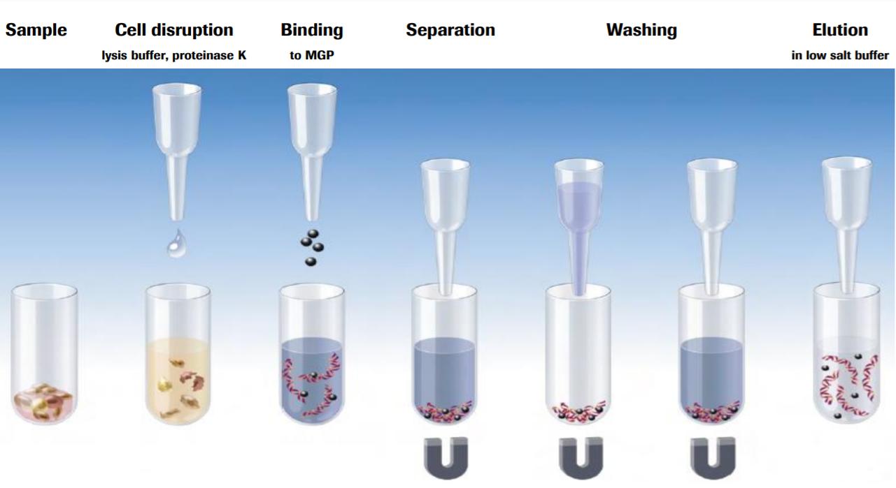 Sample Washing Phases