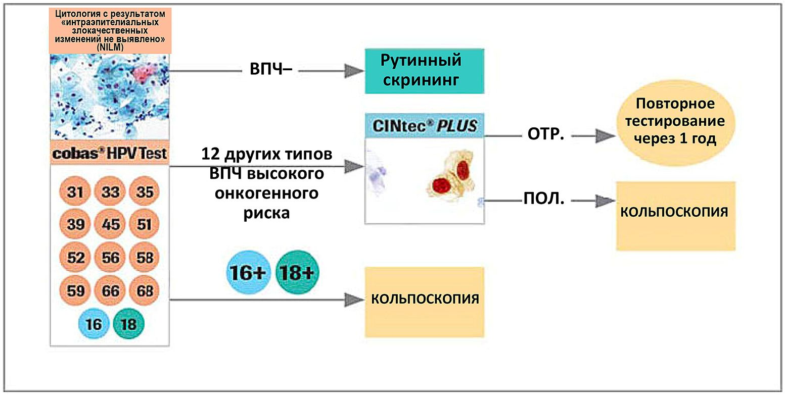 Значения теста CINtec PLUS Triage