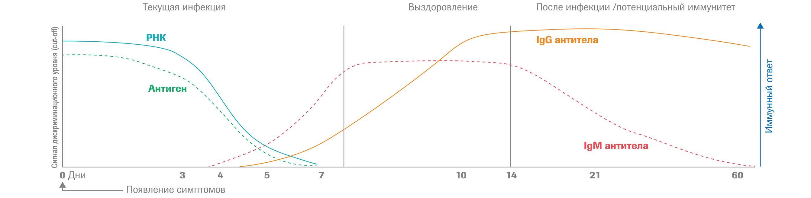 Схематическое представление маркеров в инфекции SARS-CoV-2