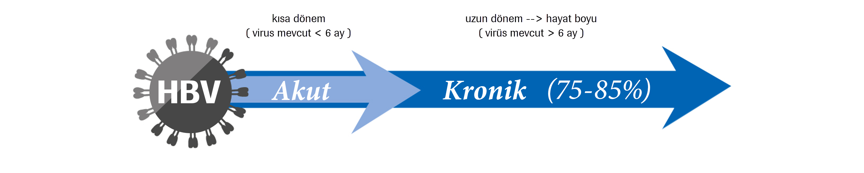 Akut ve Kronik HBV