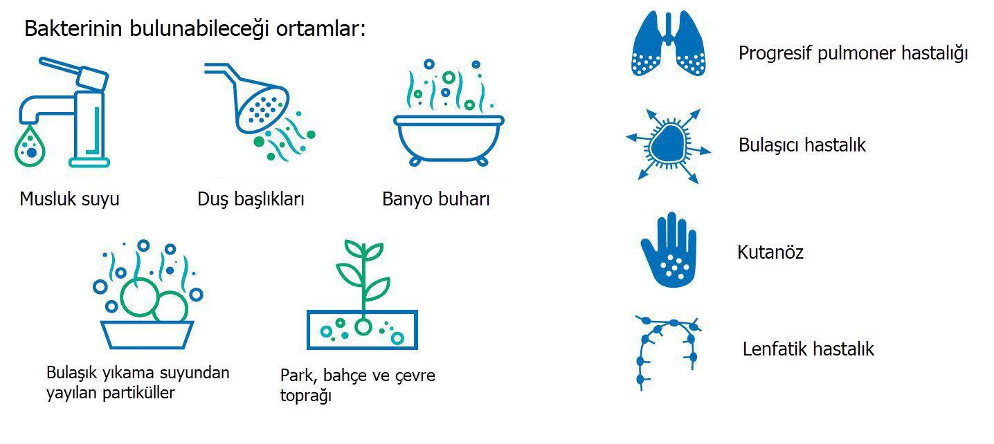 cobas MAI Bu bakteri şu gibi yerlerde bulunabilir: